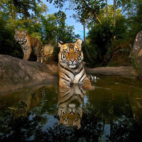 Steve Winter Leopard Photography